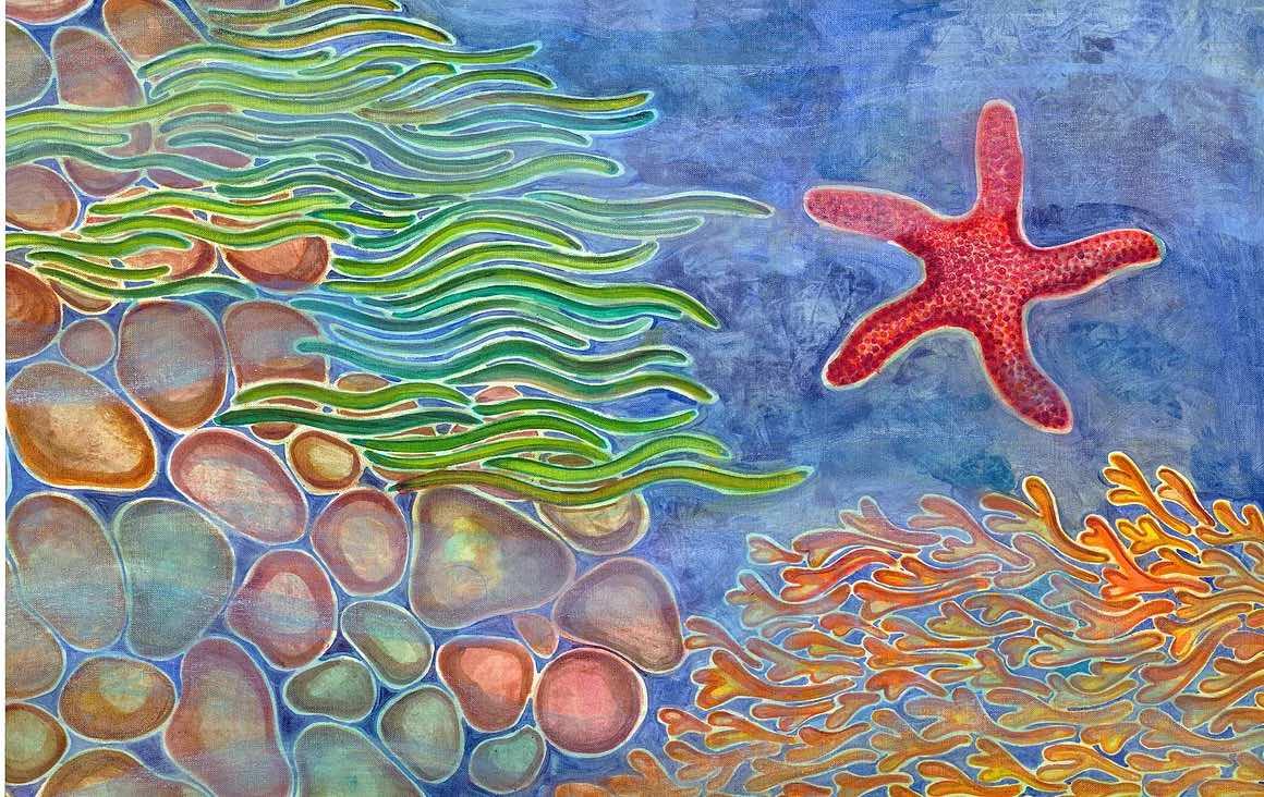 estrella de mar reproducciones