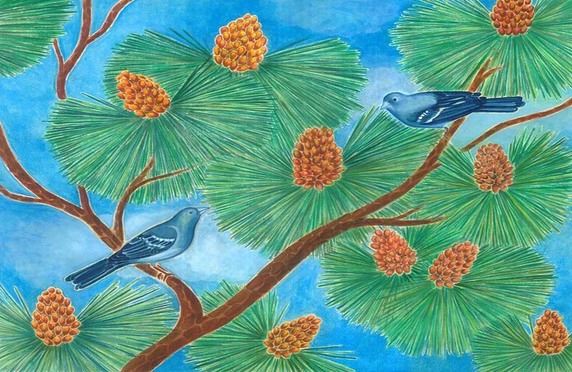 reproducciones pinzon azul canario